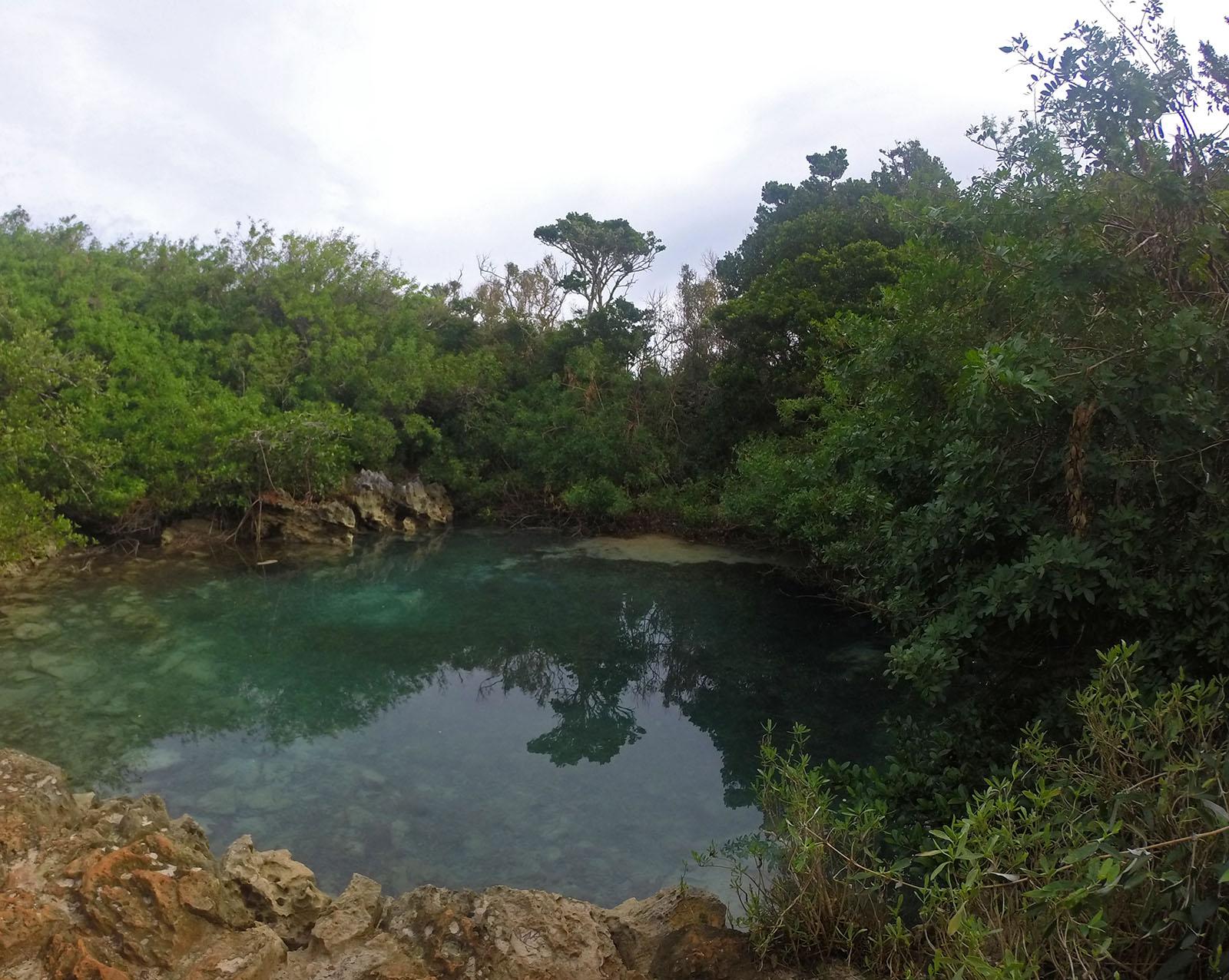 Tom Moore's Jungle – Blue Lagoon