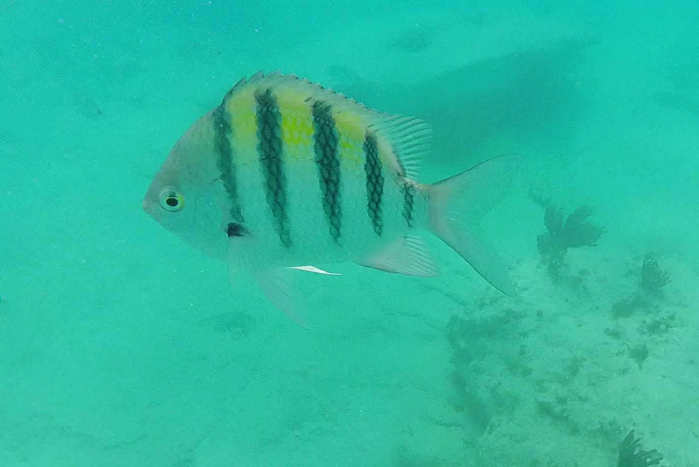 GoPro-Snorkel1